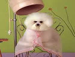 Dog Grooming in Long Beach