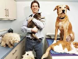 Veterinarianin Long Beach
